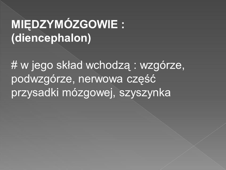 MIĘDZYMÓZGOWIE : (diencephalon) # w jego skład wchodzą : wzgórze, podwzgórze, nerwowa część przysadki mózgowej, szyszynka