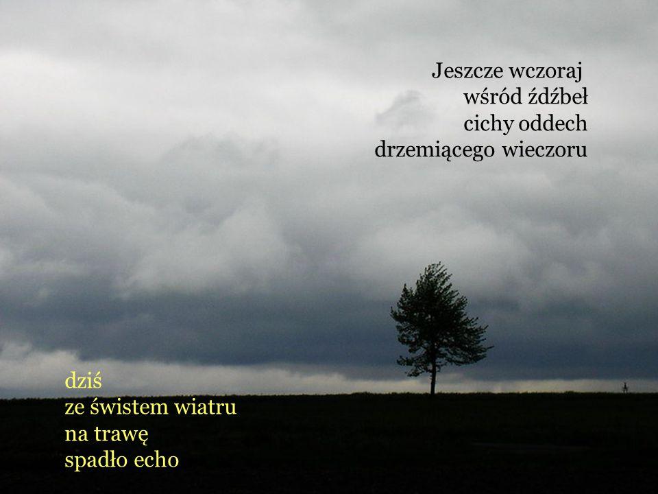 Jeszcze wczoraj wśród źdźbeł cichy oddech drzemiącego wieczoru dziś ze świstem wiatru na trawę spadło echo