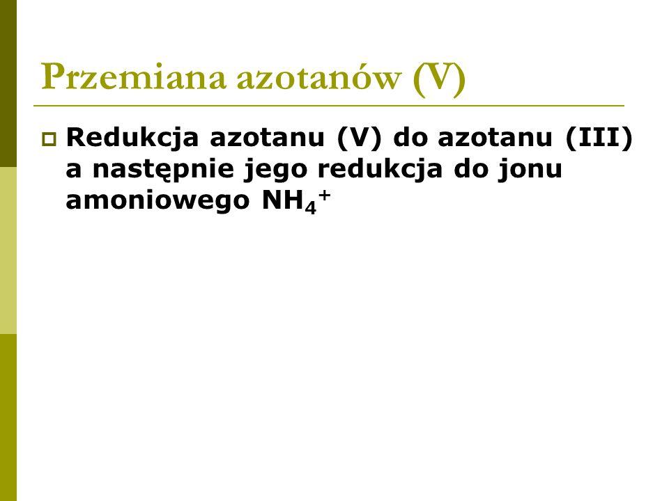 Przemiana azotanów (V)  Redukcja azotanu (V) do azotanu (III) a następnie jego redukcja do jonu amoniowego NH 4 +