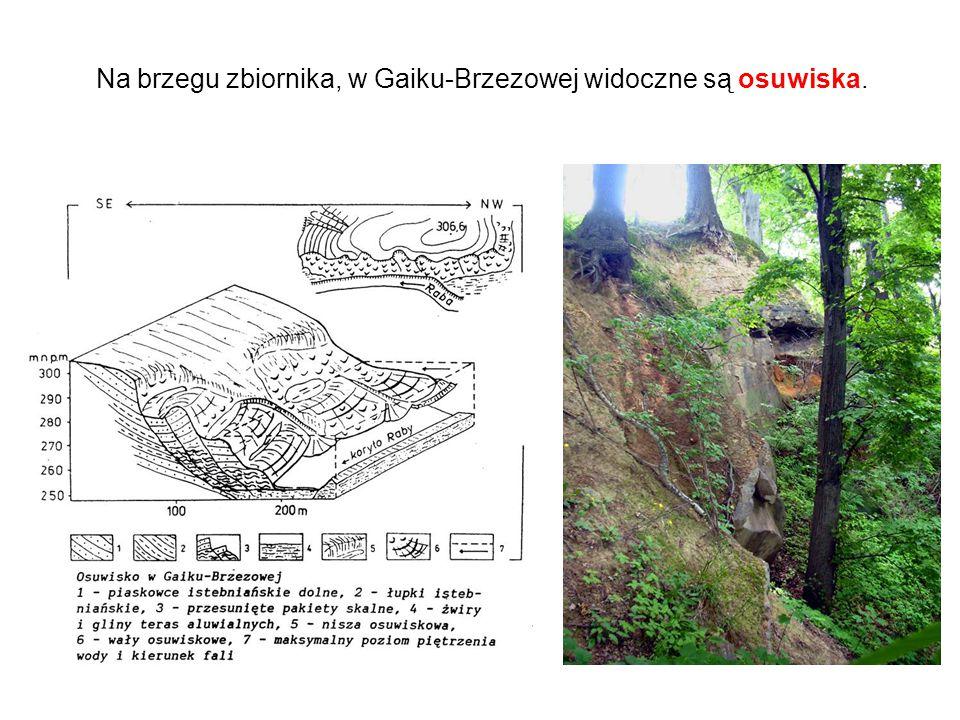 Na brzegu zbiornika, w Gaiku-Brzezowej widoczne są osuwiska.