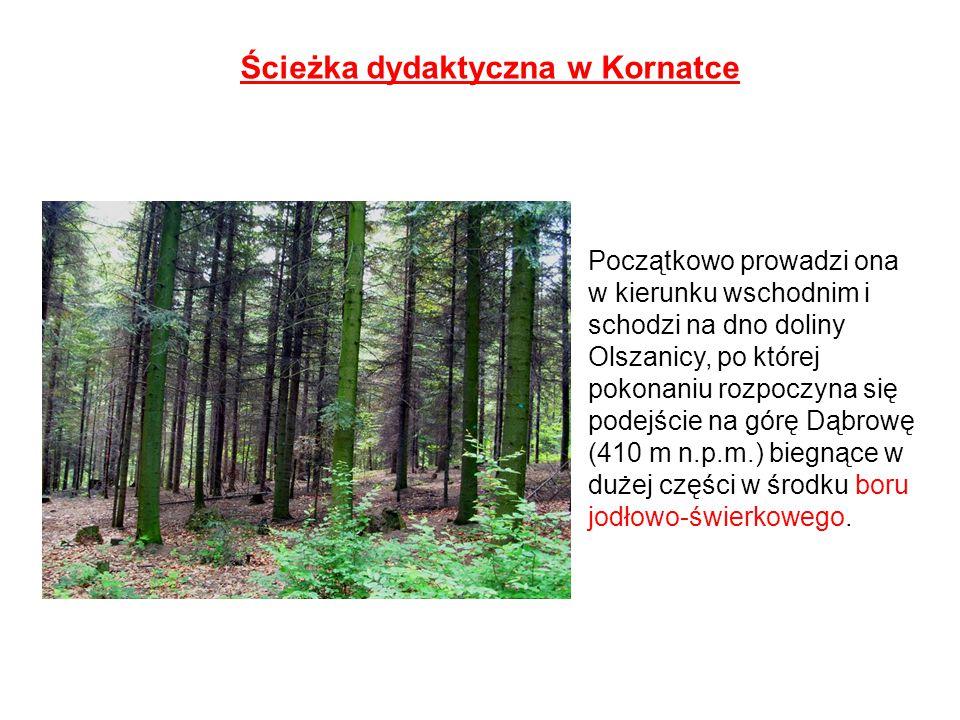 Ścieżka dydaktyczna w Kornatce Początkowo prowadzi ona w kierunku wschodnim i schodzi na dno doliny Olszanicy, po której pokonaniu rozpoczyna się pode