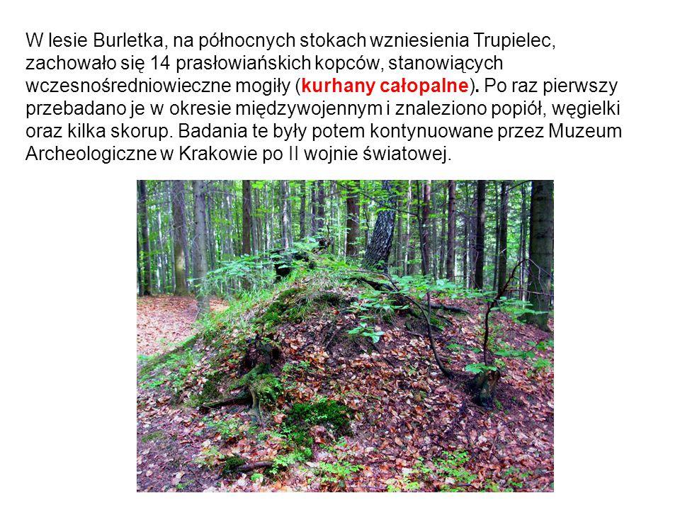 W lesie Burletka, na północnych stokach wzniesienia Trupielec, zachowało się 14 prasłowiańskich kopców, stanowiących wczesnośredniowieczne mogiły (kur