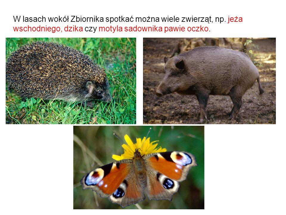 W lasach wokół Zbiornika spotkać można wiele zwierząt, np. jeża wschodniego, dzika czy motyla sadownika pawie oczko.