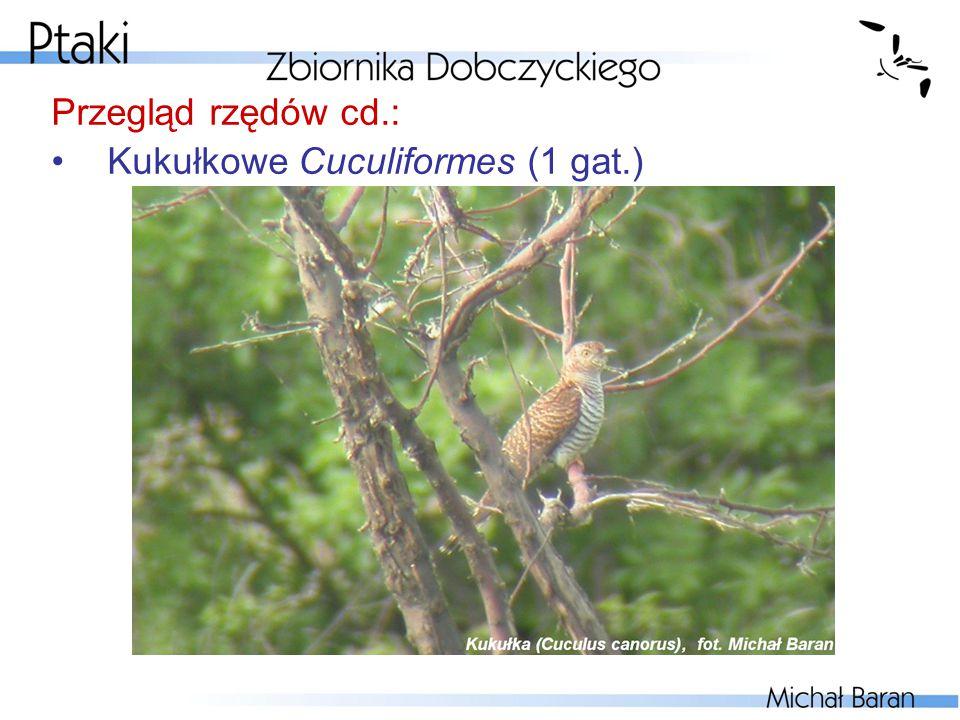 Przegląd rzędów cd.: Kukułkowe Cuculiformes (1 gat.)