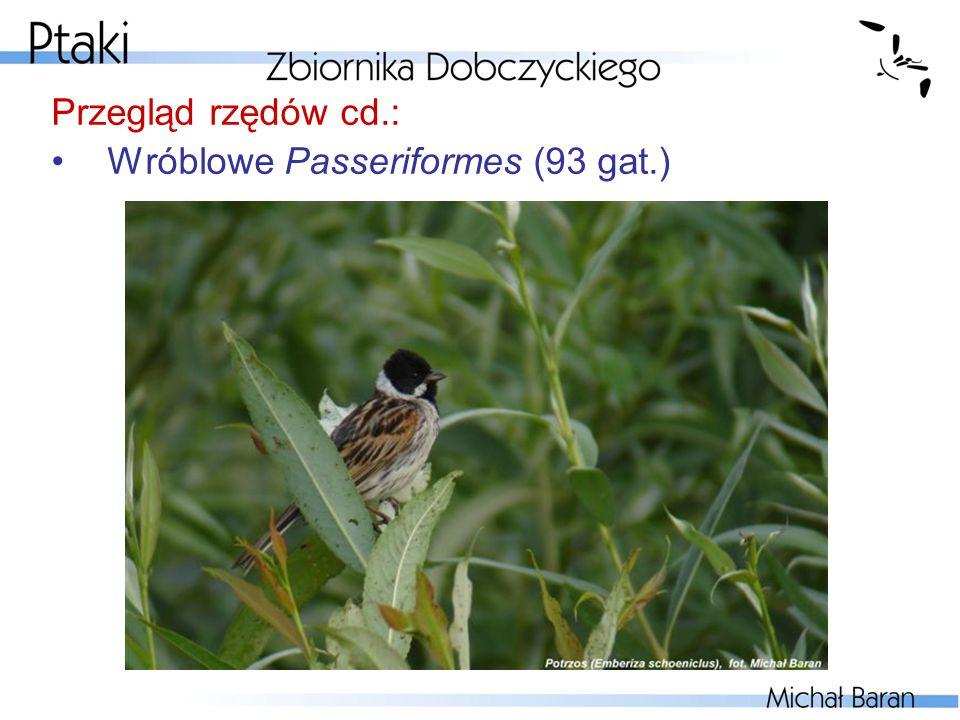 Przegląd rzędów cd.: Wróblowe Passeriformes (93 gat.)