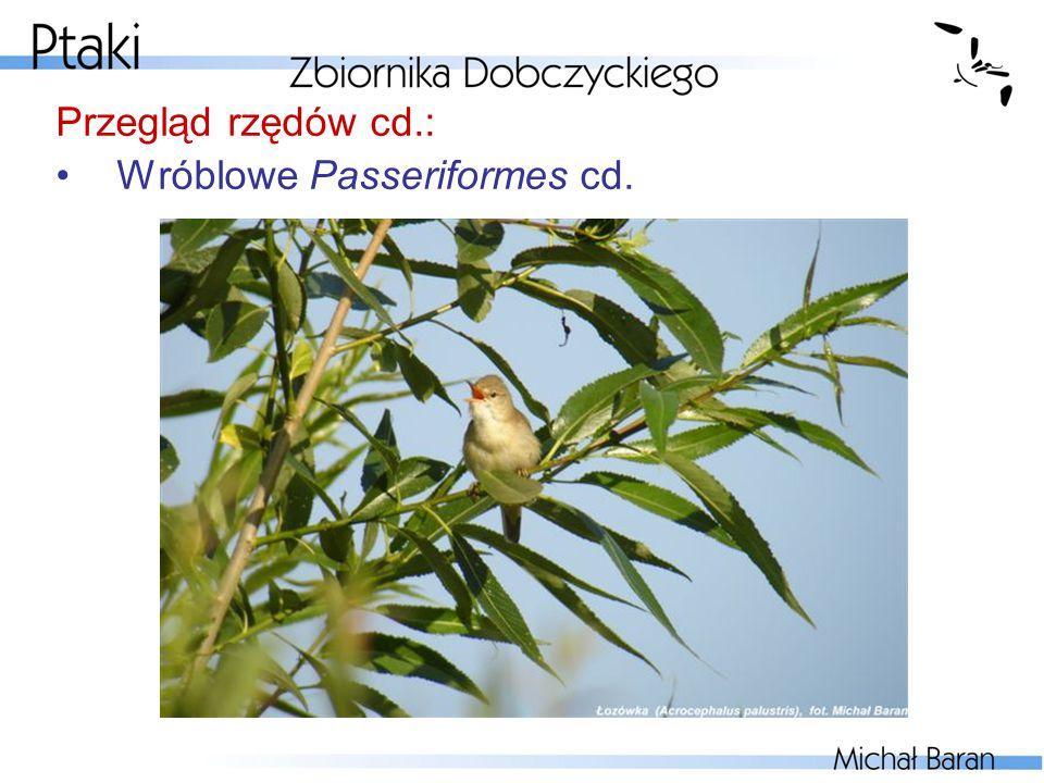 Przegląd rzędów cd.: Wróblowe Passeriformes cd.