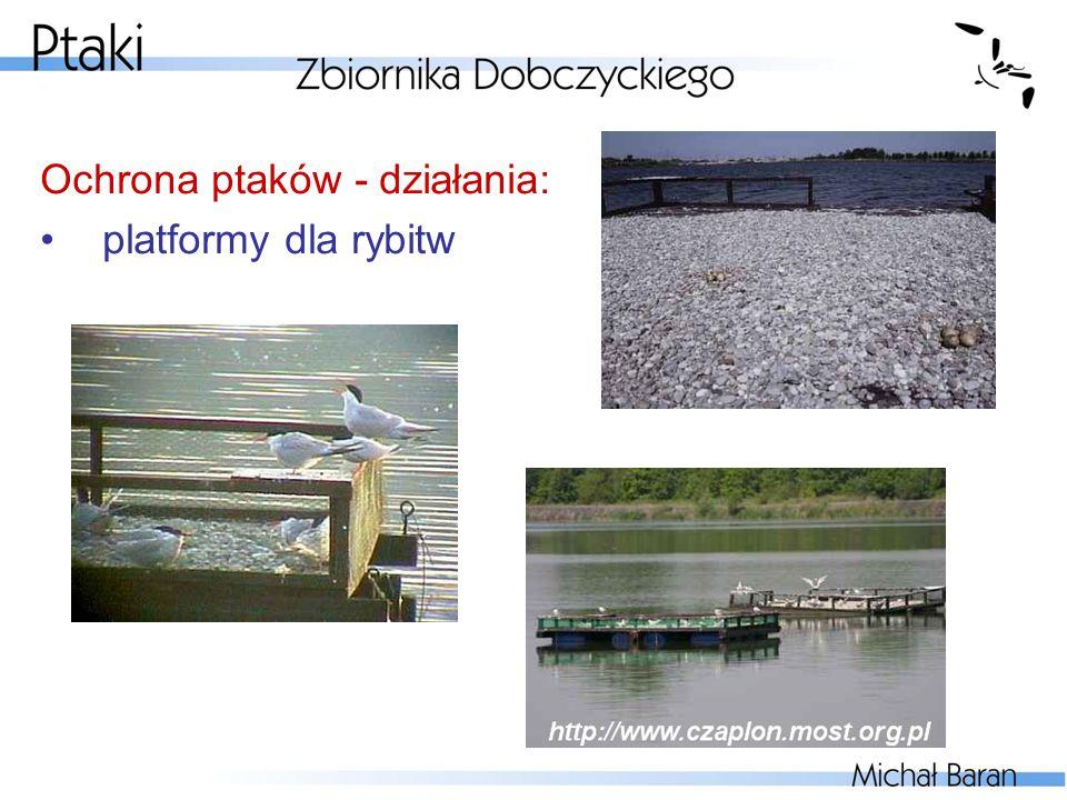Ochrona ptaków - działania: platformy dla rybitw
