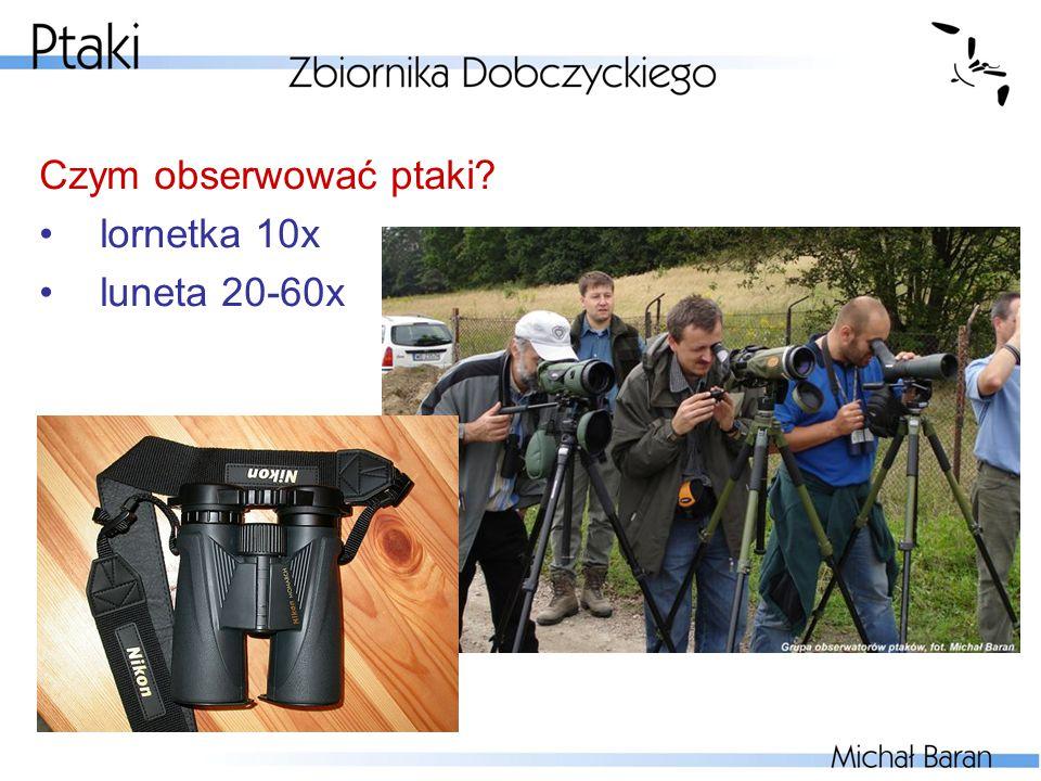 Czym obserwować ptaki? lornetka 10x luneta 20-60x