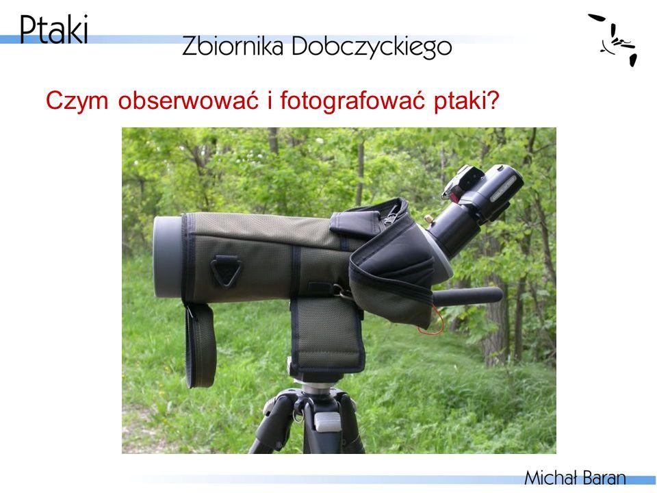 Czym obserwować i fotografować ptaki?