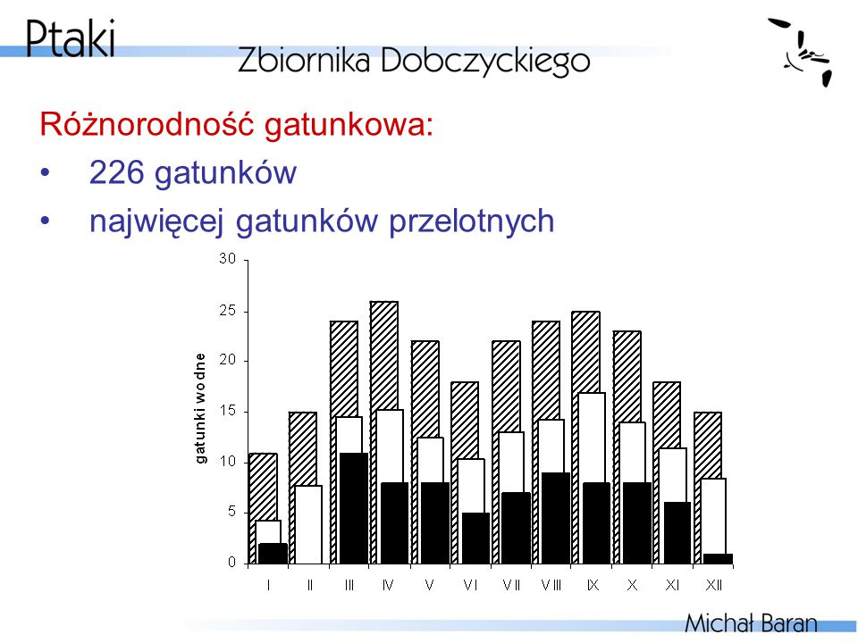 Przegląd rzędów: Nury Gaviiformes (3 gat.)