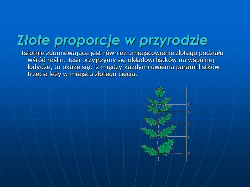 Złote proporcje w przyrodzie Istotnie zdumiewające jest również umiejscowienie złotego podziału wśród roślin.