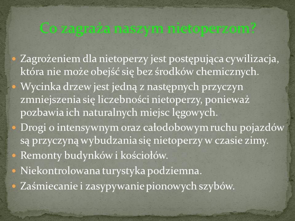 Co zagraża naszym nietoperzom? Zagrożeniem dla nietoperzy jest postępująca cywilizacja, która nie może obejść się bez środków chemicznych. Wycinka drz