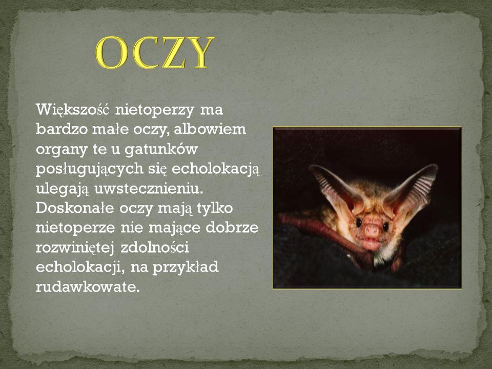 Patrycja Czerny Magda Rzeczkowska Szymon Gotowski