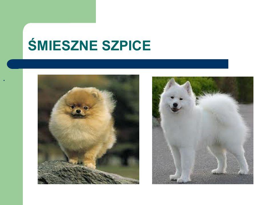 ŚMIESZNE SZPICE.