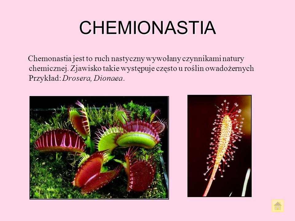 TERMONASTIA Termonastia jest ruchem organu wywołanym zmianą temperatury. Łatwo zaobserwować go u kwiatów. Większość kwiatów otwiera się pod wpływem po