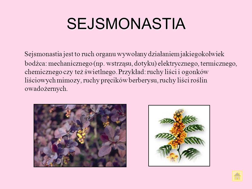 CHEMIONASTIA Chemonastia jest to ruch nastyczny wywołany czynnikami natury chemicznej. Zjawisko takie występuje często u roślin owadożernych Przykład: