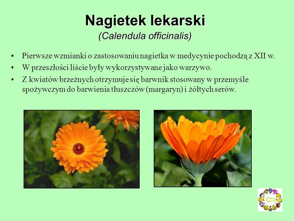 Goździk kartuzek (Dianthus carthusianorum) Sposób uprawy: wymaga słonecznego stanowiska, najlepiej sadzić go na glebach gliniasto-piaszczystych o umia