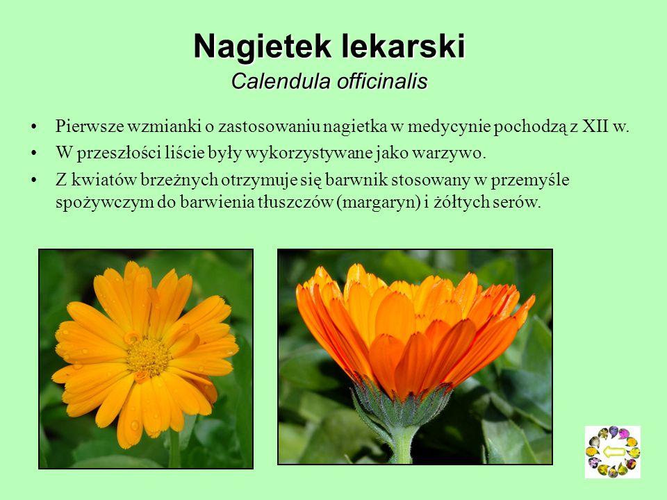 Centuria zwyczajna Centaurium umbellatum Dwuletnia roślina zielna z rodziny goryczkowatych, o różowych kwiatach; występowanie: głównie strefa umiarkow