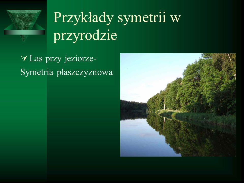 Przykłady symetrii w przyrodzie  Las przy jeziorze- Symetria płaszczyznowa