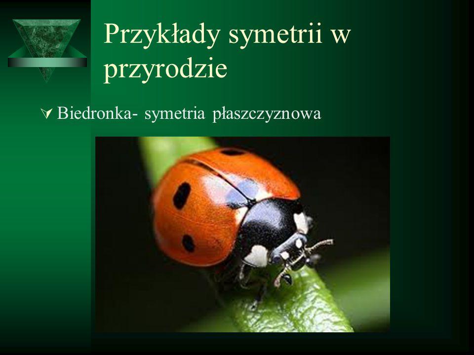Przykłady symetrii w przyrodzie  Biedronka- symetria płaszczyznowa