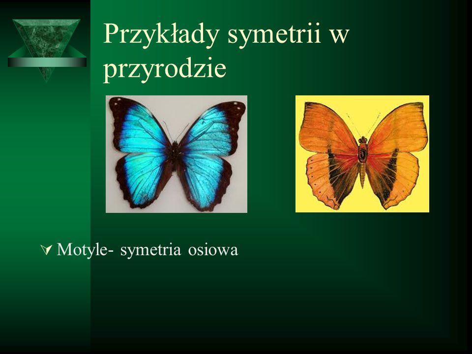 Przykłady symetrii w przyrodzie  Motyle- symetria osiowa