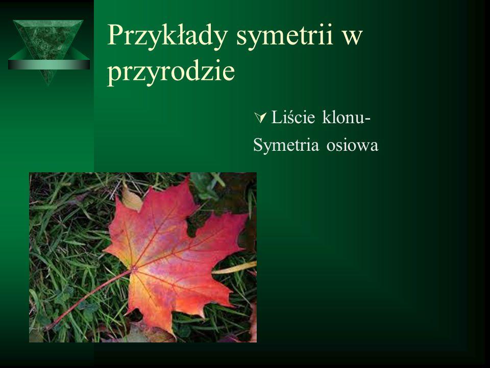 Przykłady symetrii w przyrodzie  Liście klonu- Symetria osiowa