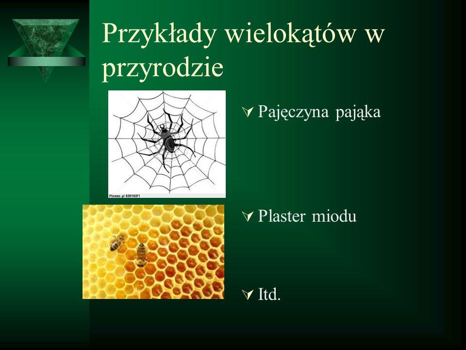 Przykłady wielokątów w przyrodzie  Pajęczyna pająka  Plaster miodu  Itd.