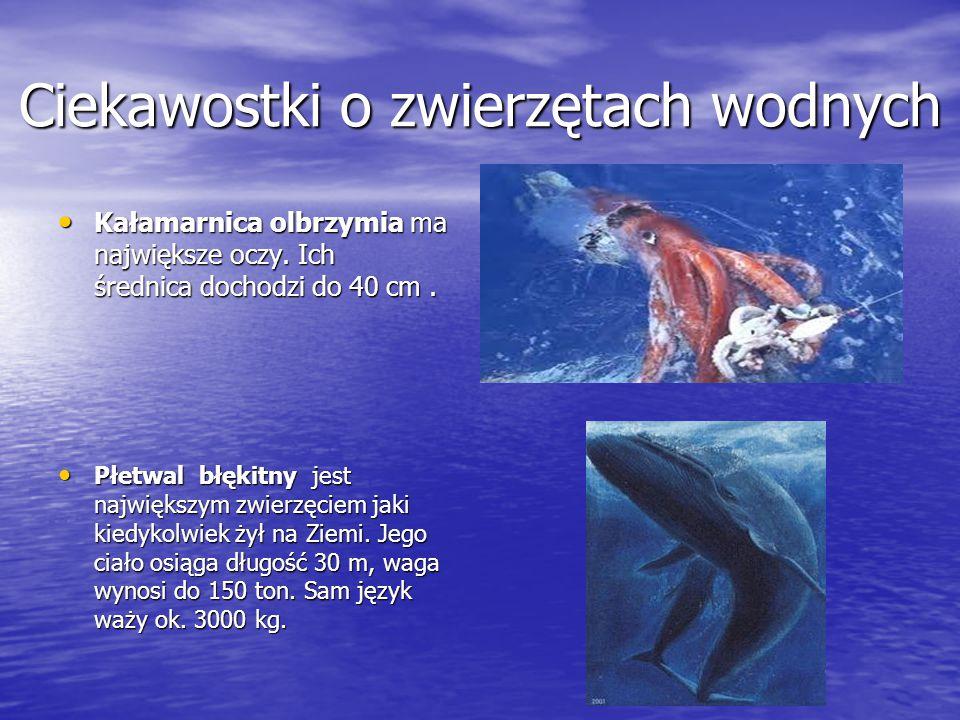 Ciekawostki o zwierzętach wodnych Kałamarnica olbrzymia ma największe oczy. Ich średnica dochodzi do 40 cm. Kałamarnica olbrzymia ma największe oczy.