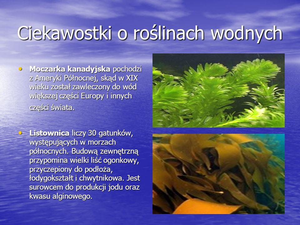 Ciekawostki o roślinach wodnych Moczarka kanadyjska pochodzi z Ameryki Północnej, skąd w XIX wieku został zawleczony do wód większej części Europy i i