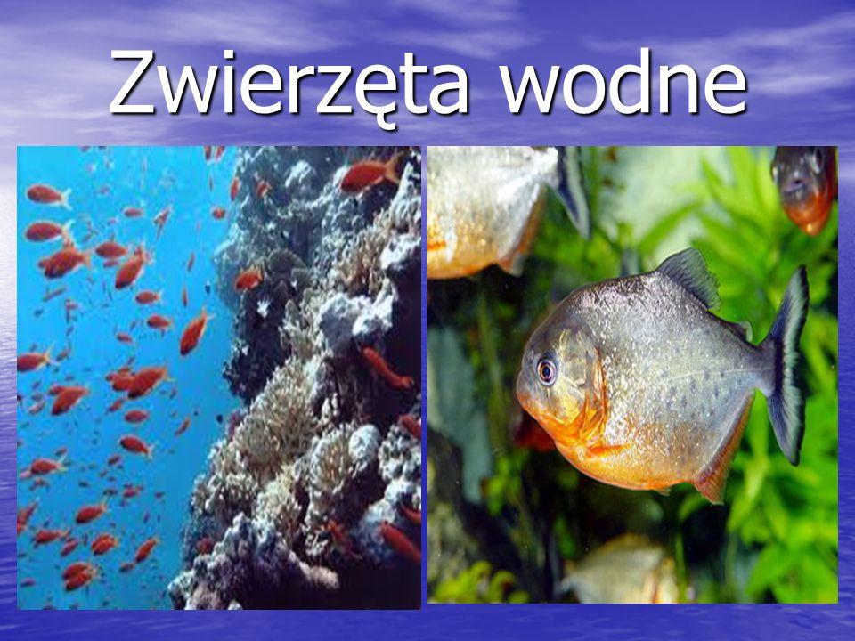 Zwierzęta wodne