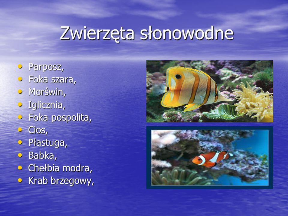 Ciekawostki o zwierzętach wodnych Kałamarnica olbrzymia ma największe oczy.