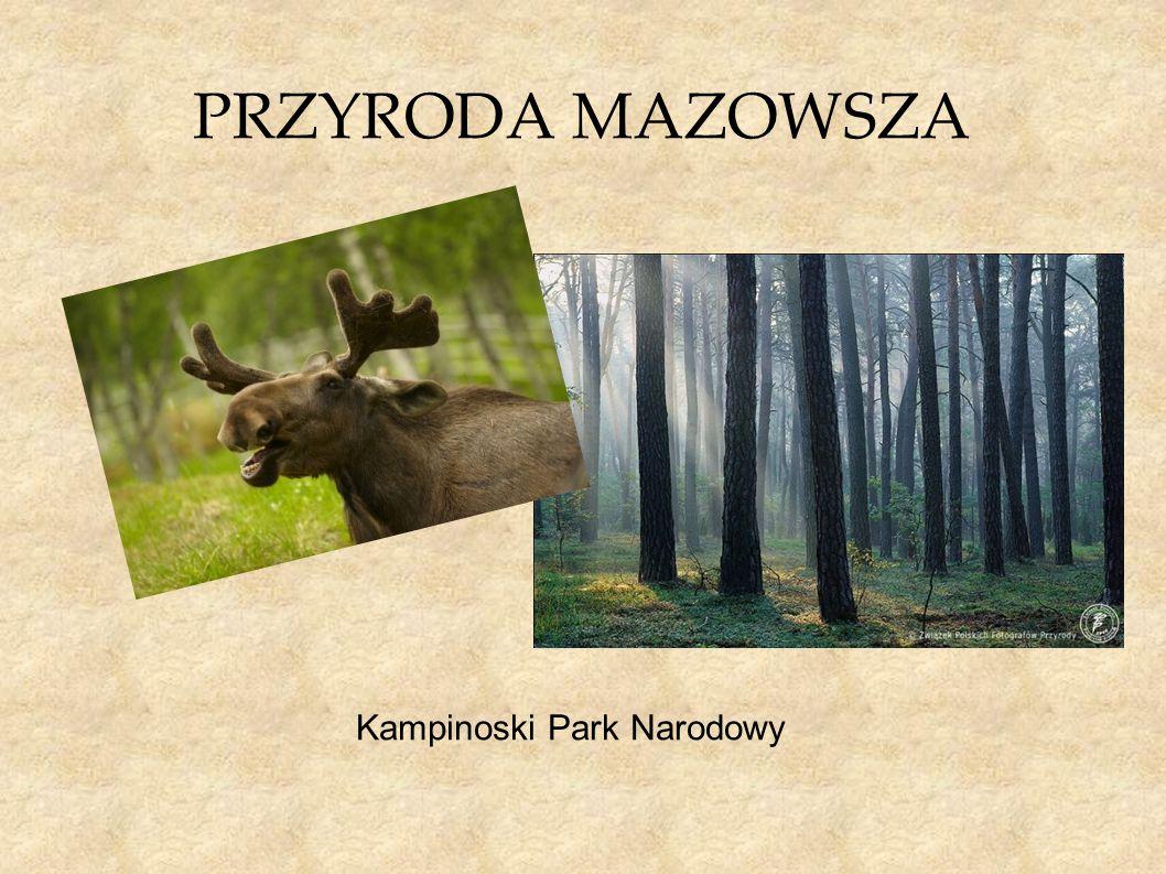 PRZYRODA MAZOWSZA Kampinoski Park Narodowy