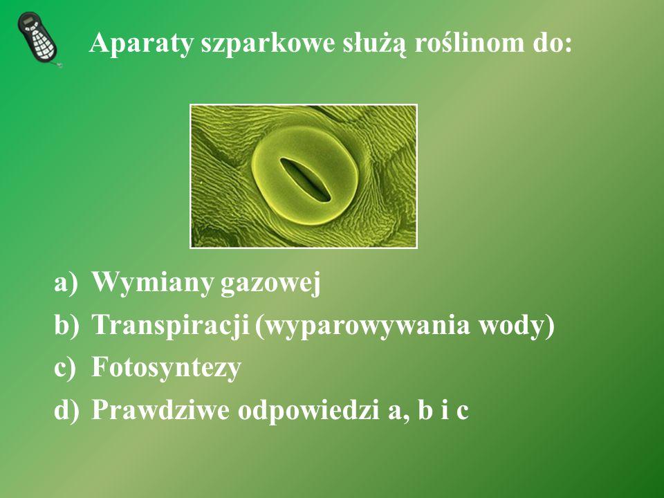 Aparaty szparkowe służą roślinom do: a)Wymiany gazowej b)Transpiracji (wyparowywania wody) c)Fotosyntezy d)Prawdziwe odpowiedzi a, b i c
