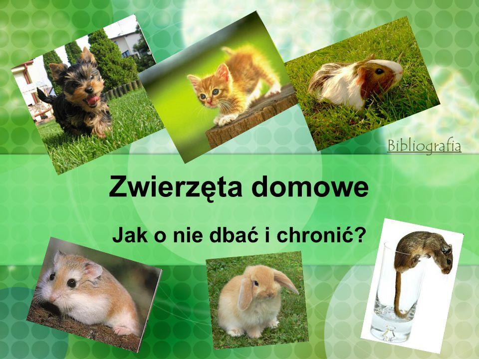 Zwierzęta domowe Jak o nie dbać i chronić? Bibliografia