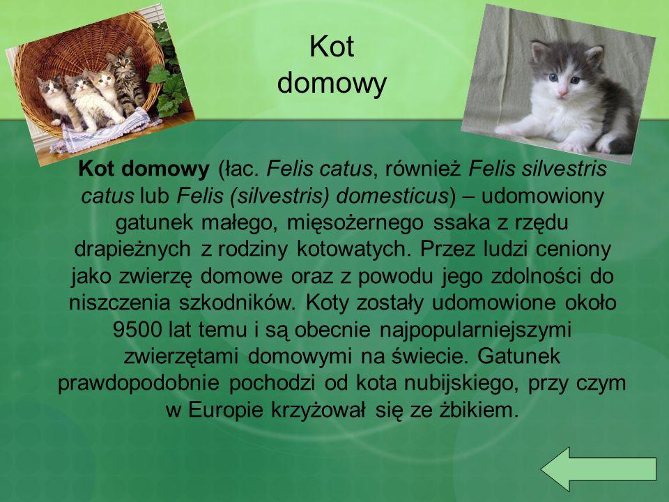 Kot domowy (łac. Felis catus, również Felis silvestris catus lub Felis (silvestris) domesticus) – udomowiony gatunek małego, mięsożernego ssaka z rzęd