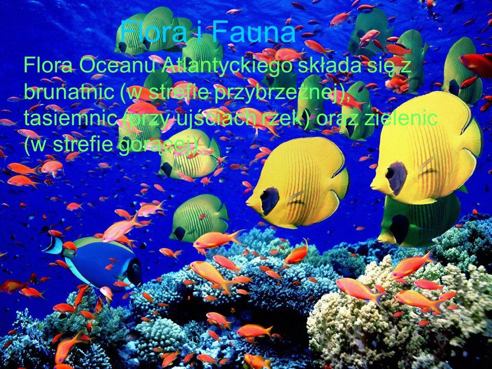 Flora i Fauna Flora Oceanu Atlantyckiego składa się z brunatnic (w strefie przybrzeżnej), tasiemnic (przy ujściach rzek) oraz zielenic (w strefie gorą
