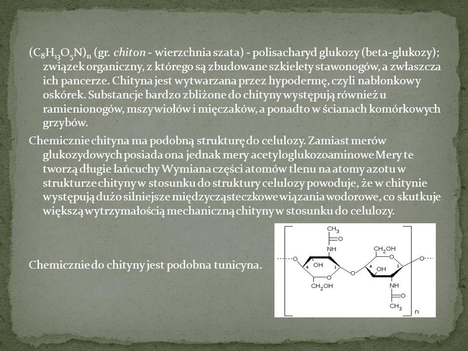 (C 8 H 13 O 5 N) n (gr. chiton - wierzchnia szata) - polisacharyd glukozy (beta-glukozy); związek organiczny, z którego są zbudowane szkielety stawono