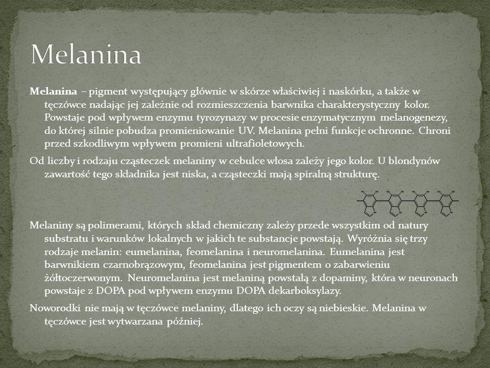 Melanina – pigment występujący głównie w skórze właściwiej i naskórku, a także w tęczówce nadając jej zależnie od rozmieszczenia barwnika charakteryst