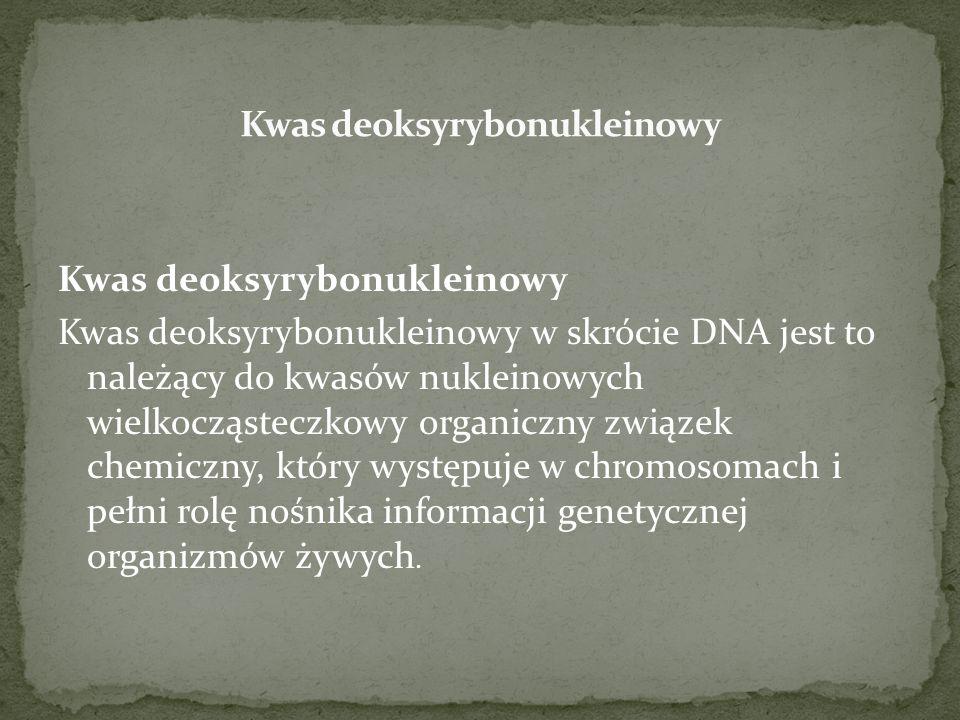 Kwas deoksyrybonukleinowy Kwas deoksyrybonukleinowy w skrócie DNA jest to należący do kwasów nukleinowych wielkocząsteczkowy organiczny związek chemic