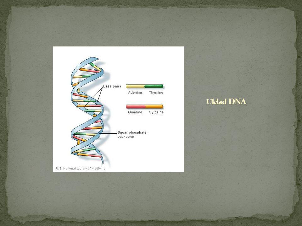Białka - wielkocząsteczkowe (masa cząsteczkowa biopolimery, a właściwie biologiczne polikondensaty, zbudowane z reszt od ok.