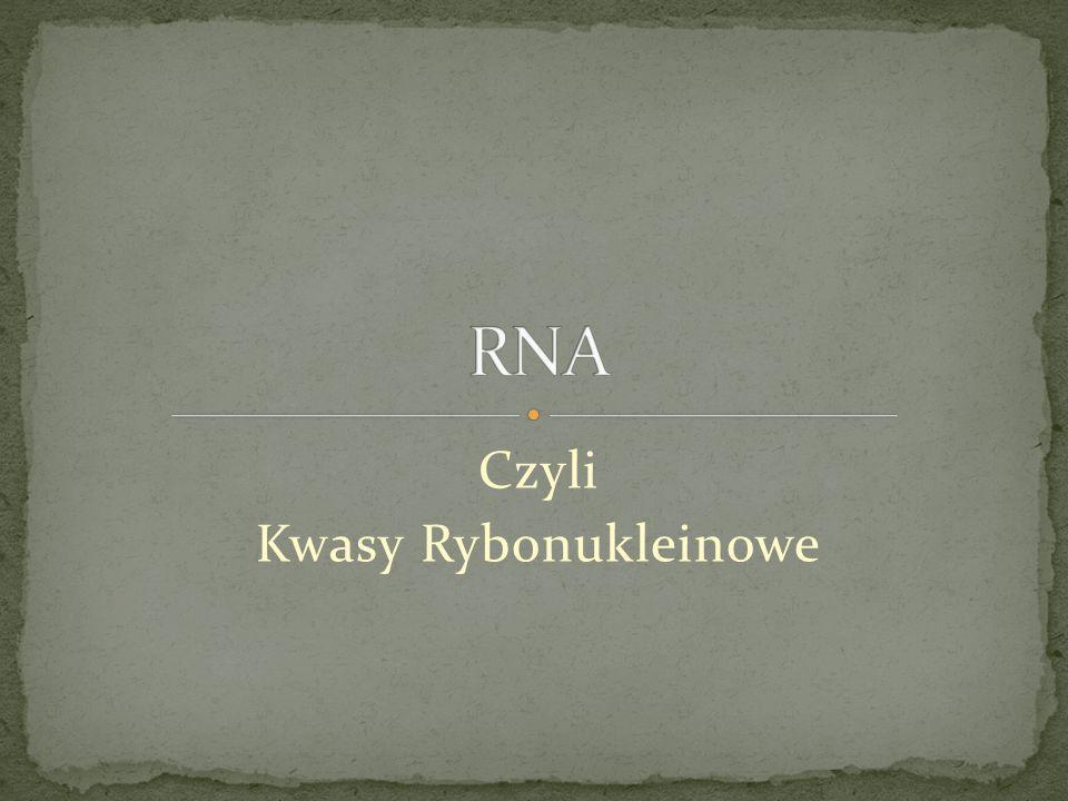 Kwasy rybonukleinowe, RNA, polimery kondensacyjne rybonukleotydów, występujące zarówno w jądrze komórkowym, jak i w cytoplazmie.