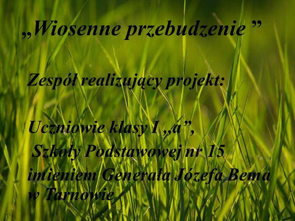 """""""Wiosenne przebudzenie """" Zespół realizujący projekt: Uczniowie klasy I,,a"""", Szkoły Podstawowej nr 15 imieniem Generała Józefa Bema w Tarnowie"""