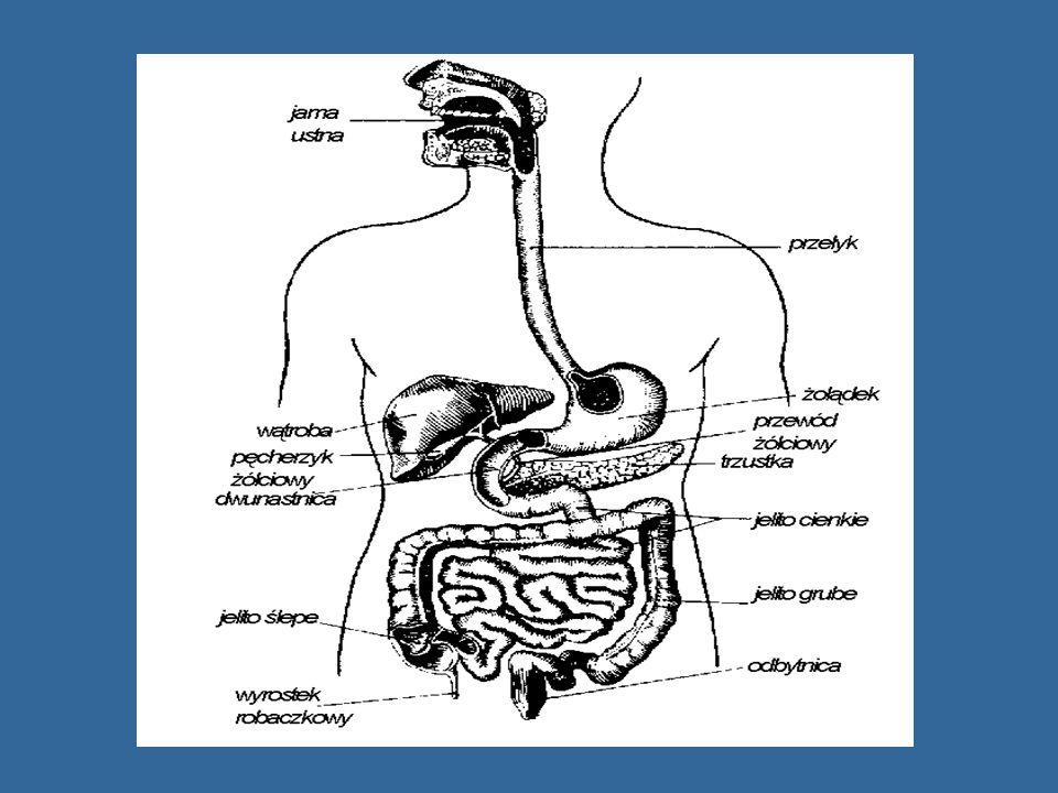 OBJAWY GIARDIOZY Okres wylęgania choroby trwa kilka - kilkanaście dni Okres wylęgania choroby trwa kilka - kilkanaście dni I stadium I stadium nudności, wymioty, biegunka Postać przewlekła Postać przewlekła - naprzemienne biegunki i zaparcia, nudności - brak łaknienia, zgaga, bóle w nadbrzuszu - bóle głowy, stany podgorączkowe, szybkie męczenie męczenie - zmiany alergiczne na skórze.