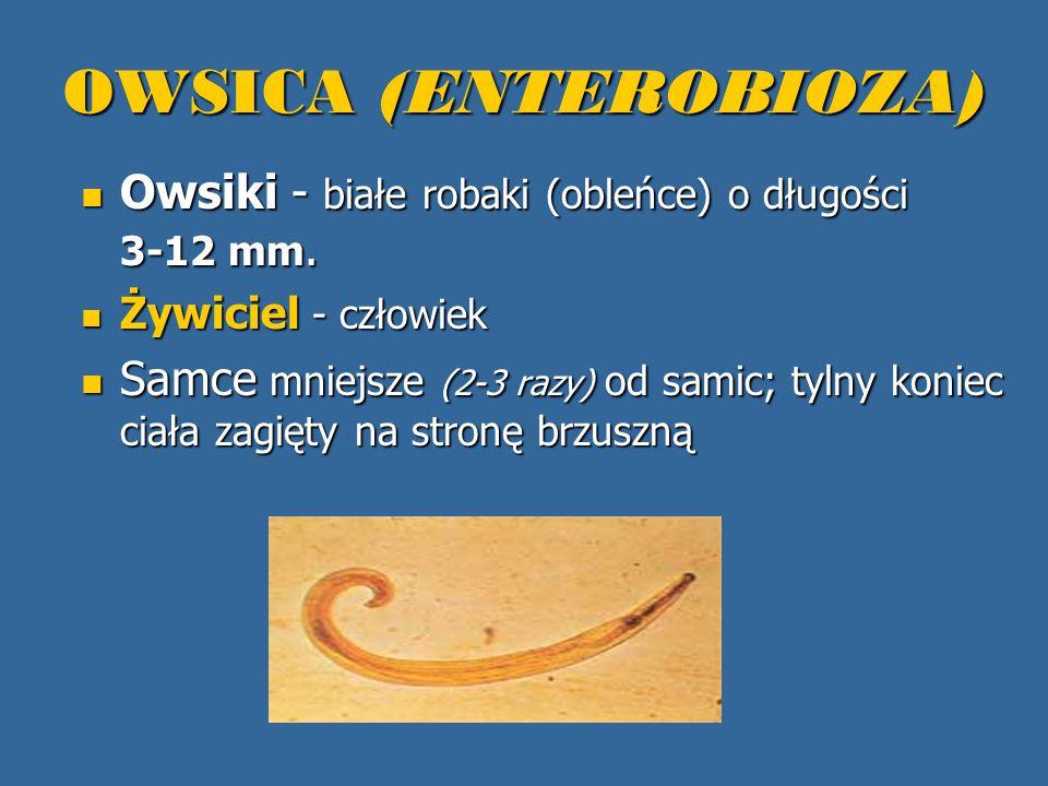 OWSICA (ENTEROBIOZA) Owsiki - białe robaki (obleńce) o długości 3-12 mm. Owsiki - białe robaki (obleńce) o długości 3-12 mm. Żywiciel - człowiek Żywic