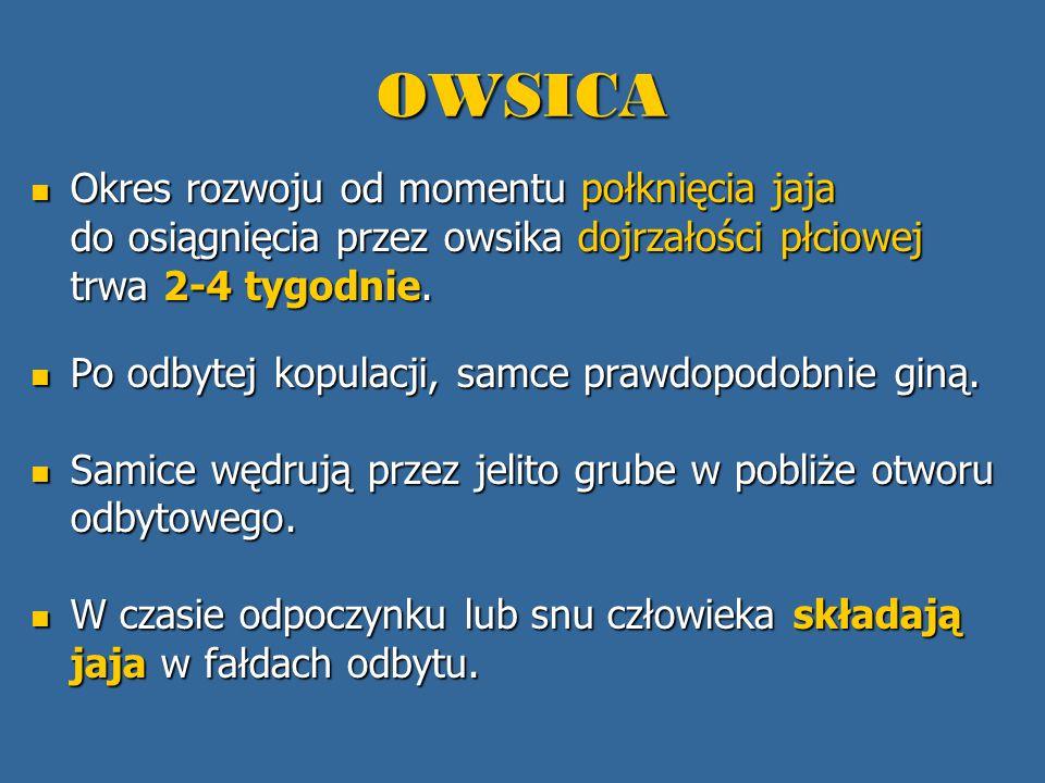 OWSICA Okres rozwoju od momentu połknięcia jaja do osiągnięcia przez owsika dojrzałości płciowej trwa 2-4 tygodnie. Okres rozwoju od momentu połknięci