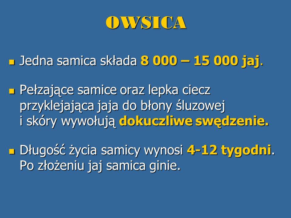 OWSICA Po (4) 6-8 godzinach od momentu złożenia (w temperaturze ok.
