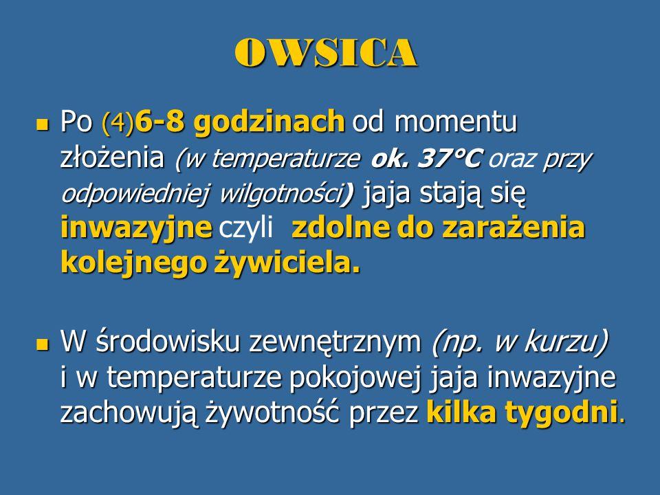 OWSICA Po (4) 6-8 godzinach od momentu złożenia (w temperaturze ok. 37°C przy odpowiedniej wilgotności) jaja stają się inwazyjne zdolne do zarażenia k