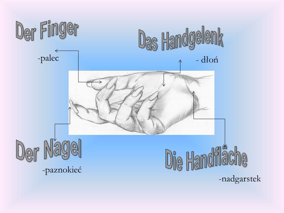 -palec - dłoń -nadgarstek -paznokieć