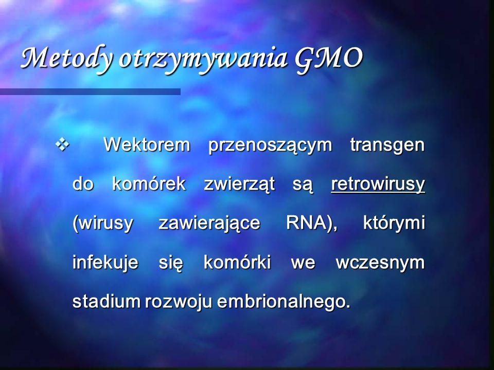 Metody otrzymywania GMO  Wektorem przenoszącym transgen do komórek zwierząt są retrowirusy (wirusy zawierające RNA), którymi infekuje się komórki we