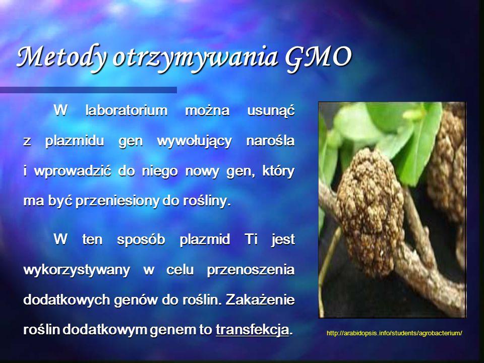 Metody otrzymywania GMO W laboratorium można usunąć z plazmidu gen wywołujący narośla i wprowadzić do niego nowy gen, który ma być przeniesiony do roś